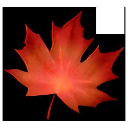 autumnleaf-red-image.png
