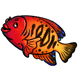 fish-red-image.png