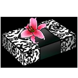 blackwhite-box-image.png