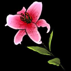 stargazer-lily-image.png