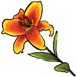 summer-lily-image.png