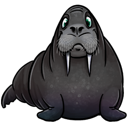 walrus-image.png