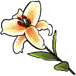 white-lily-image.png