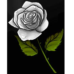 white-rose-image.png